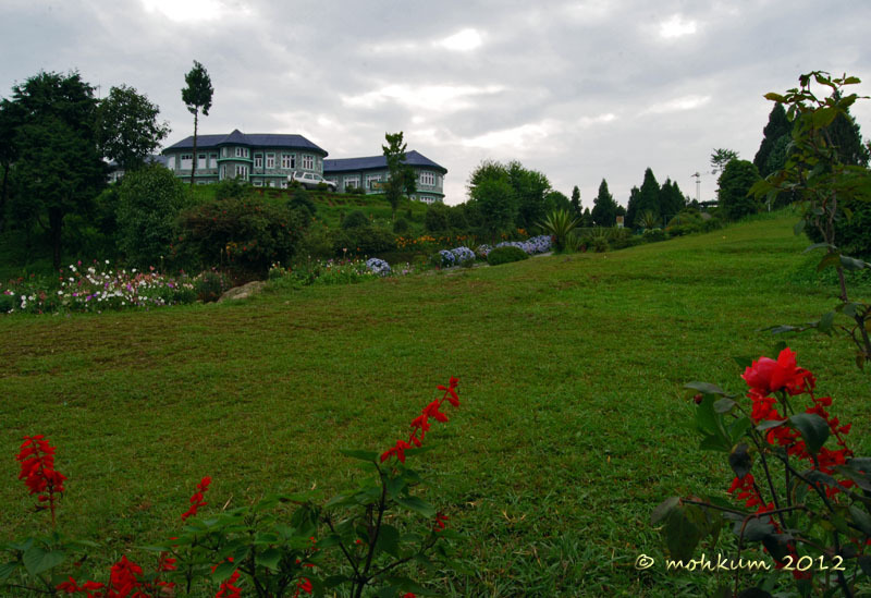 The lush green lawn!