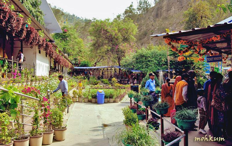 garden flower haridwar
