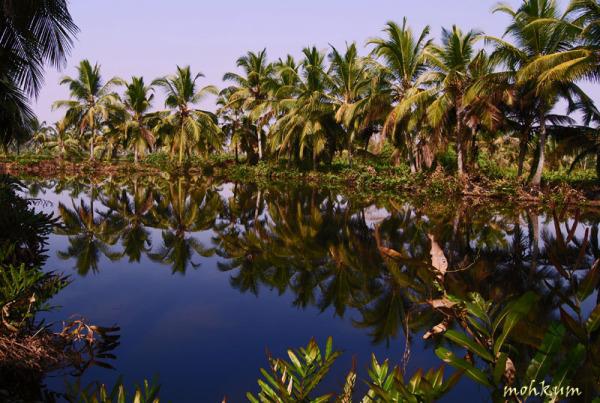 The serene backwaters of Kerala!