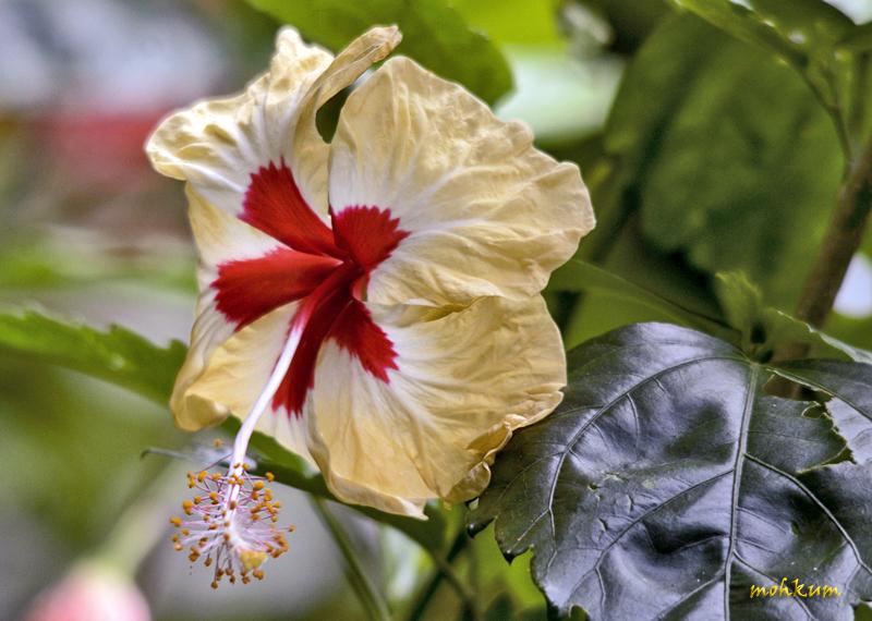 The elegant flower!