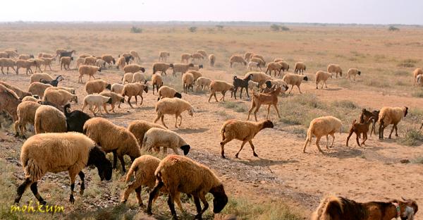 The farmlands of Kutch