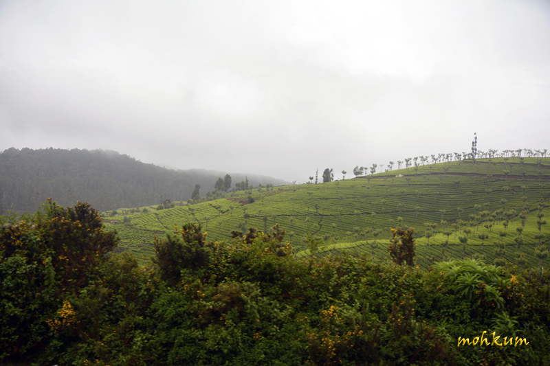 The Ooty hills!