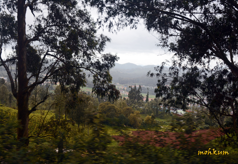 From the Ooty hills!