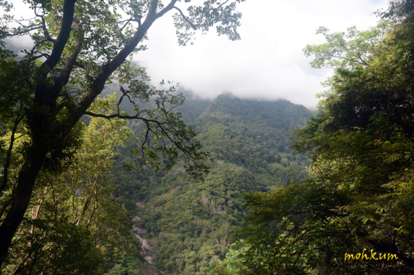 The coonoor forest!