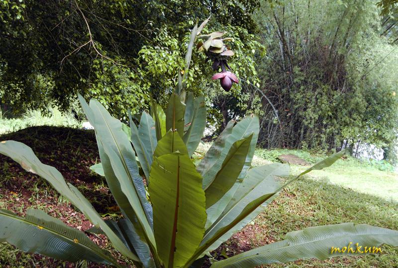 The rich plant!