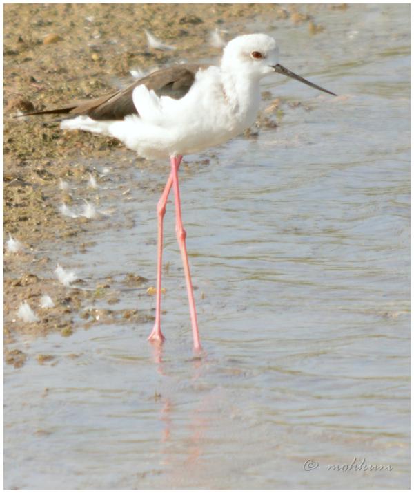 The Khijadia Bird Sancturary!