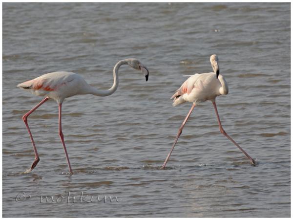 The flamingos!