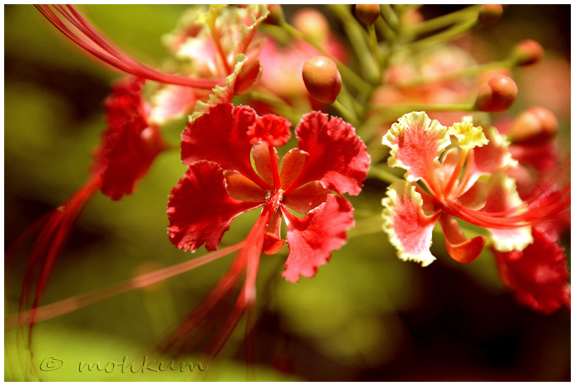 The beauty of flower!