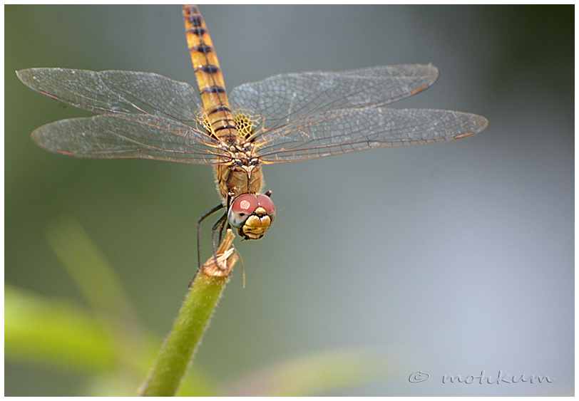 The dragonfly!