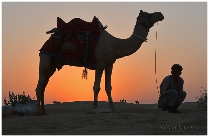 The glory of the camel land!