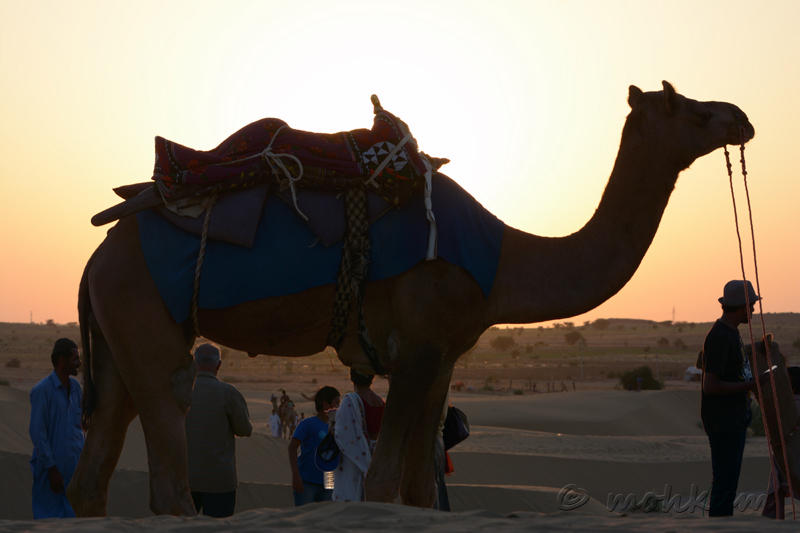 The camel!
