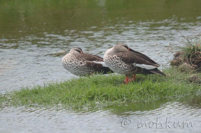 The sleeping ducks!