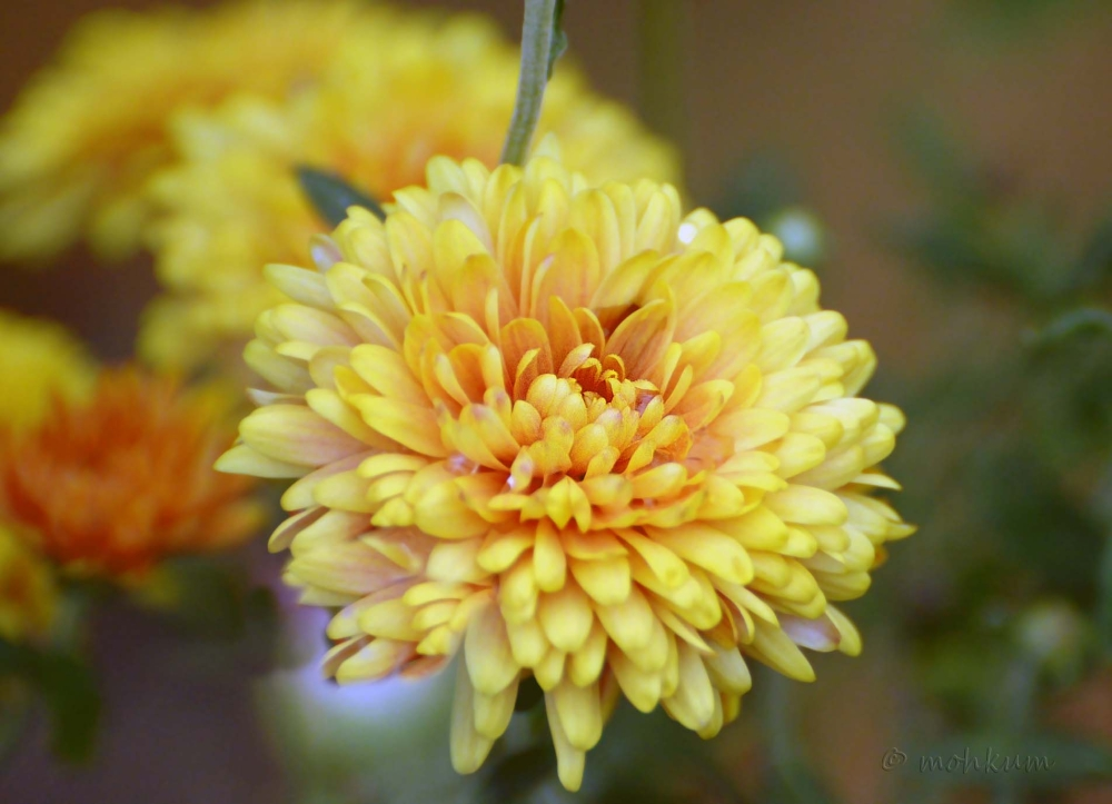 The blooming yellow!