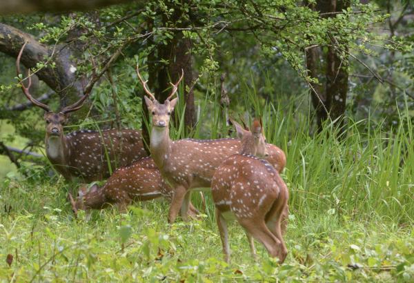 deer forest thopetty wayanad kerala