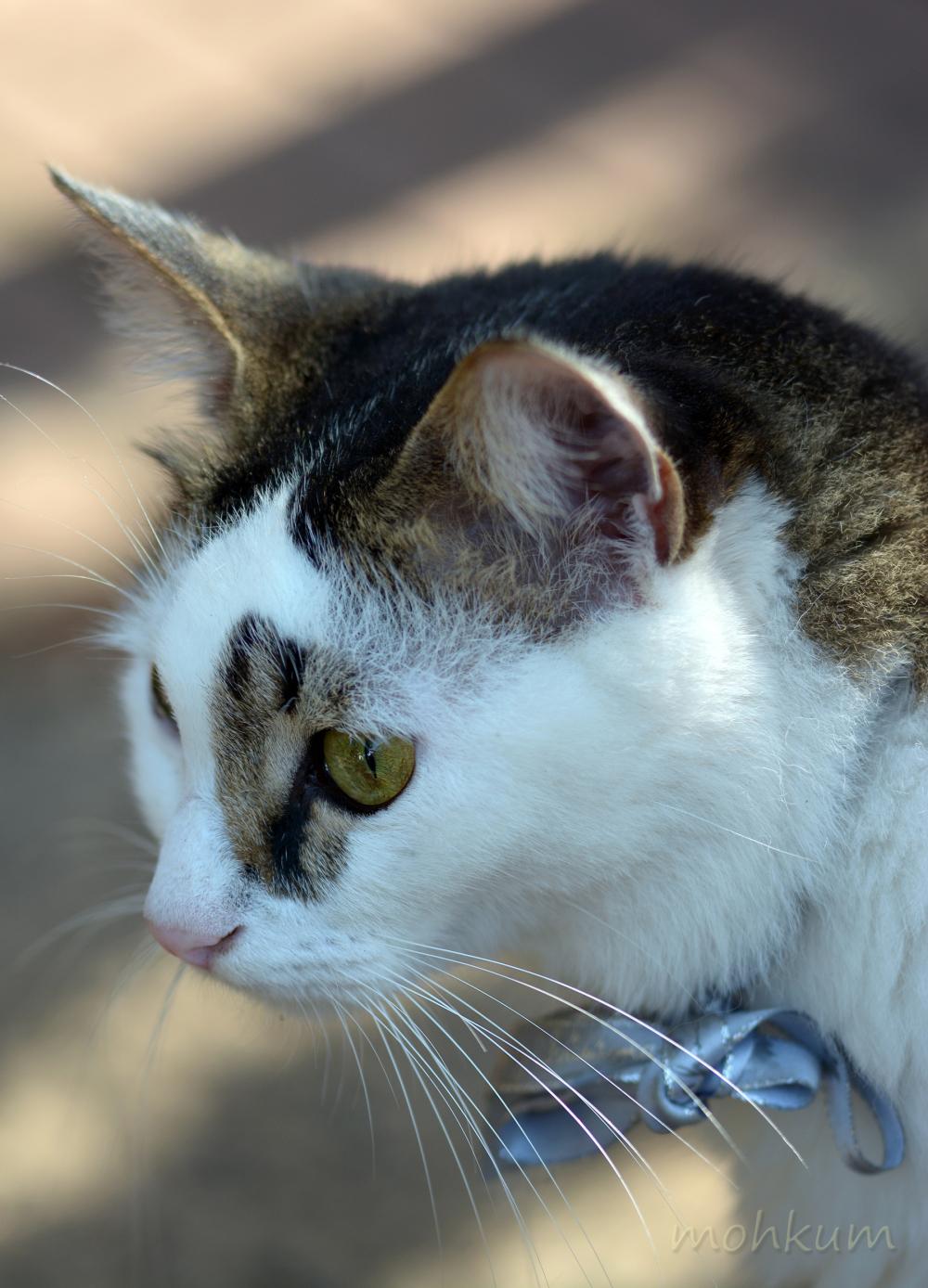 Kitties we love...