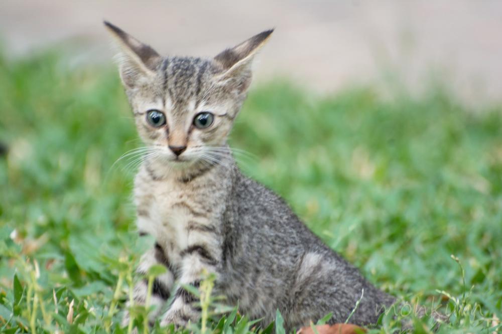 The sweet little kitty!