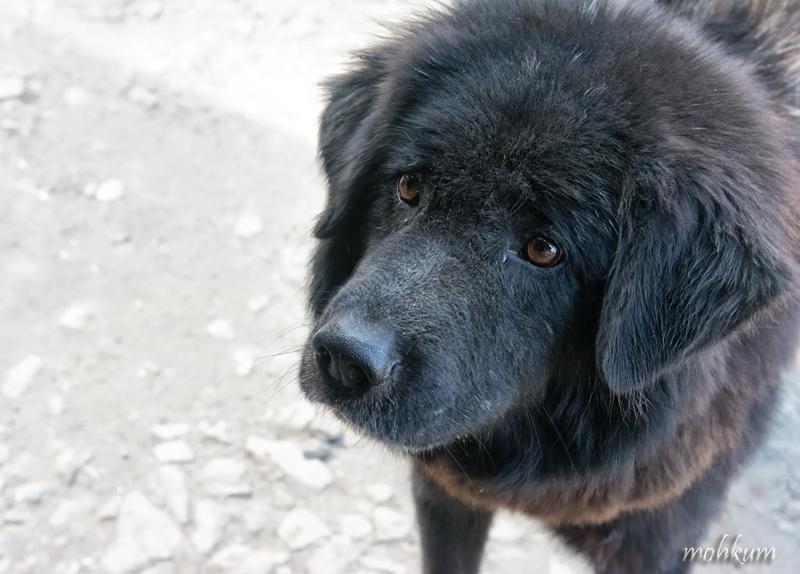 The loyal companion!