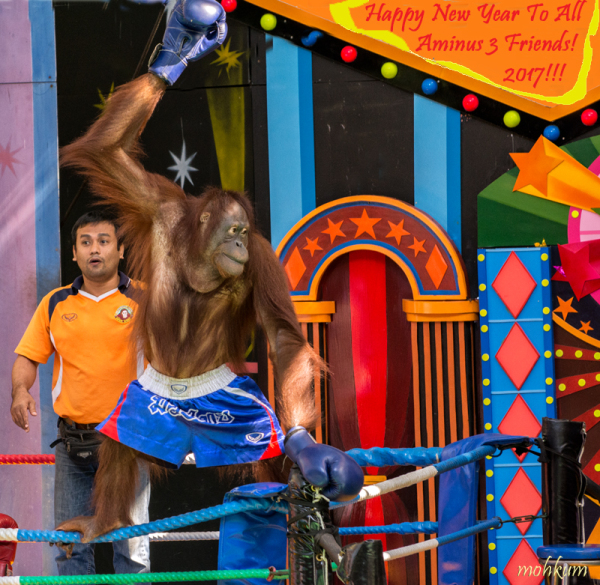 animal show zoo thailand