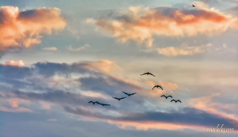 birds cloud sky