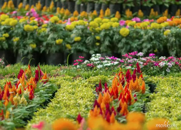 flowershow kochi
