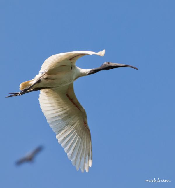 ibis thailand