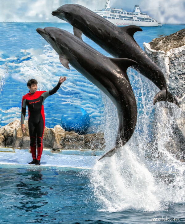 dolphin show thailand