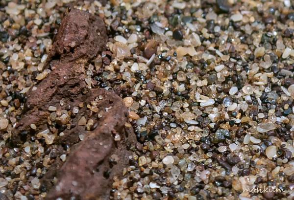 sand beach goa