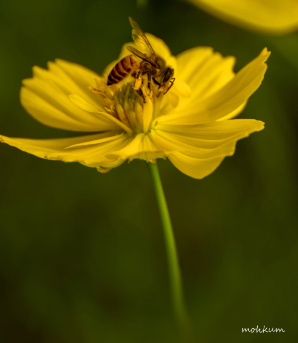 bee flower nectar