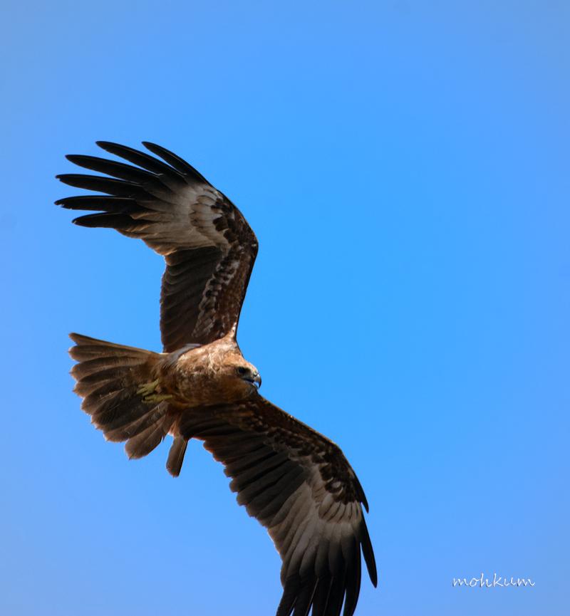 bird flight sky
