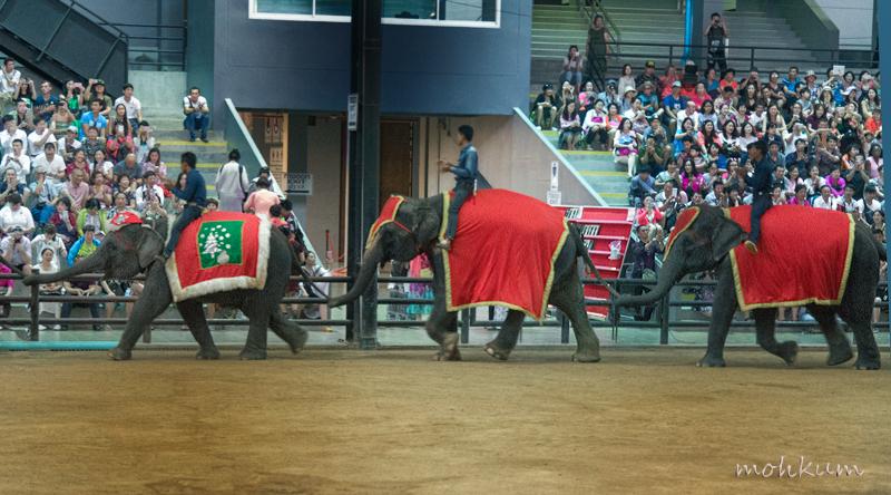 elephant show thailand
