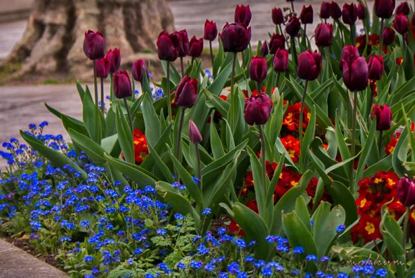tulip garden london
