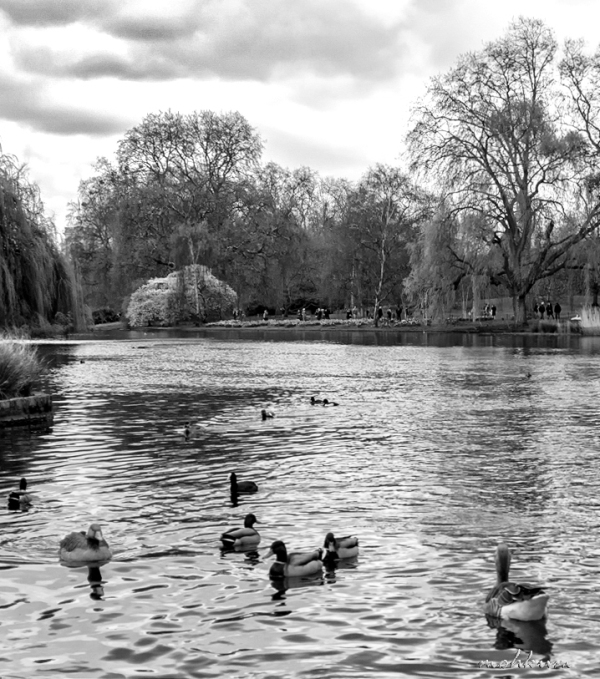 lake park duck people