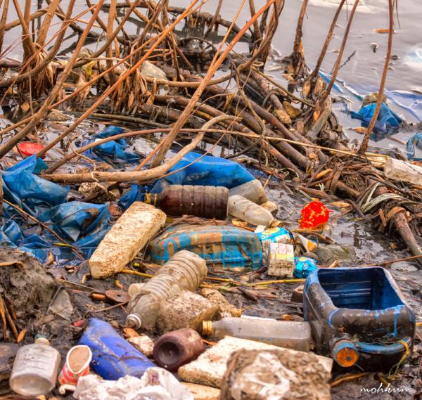 environment day plasticfree mattancherry kochi