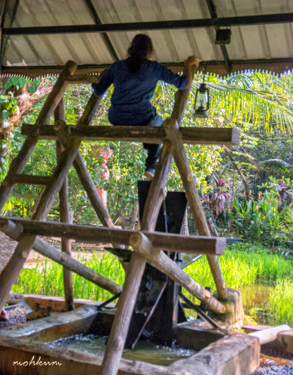waterwheel chakkram kuttanad paddy farm irrigation
