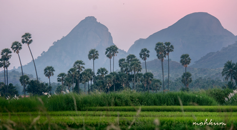 mountain paddy fields greenery village tenkasi