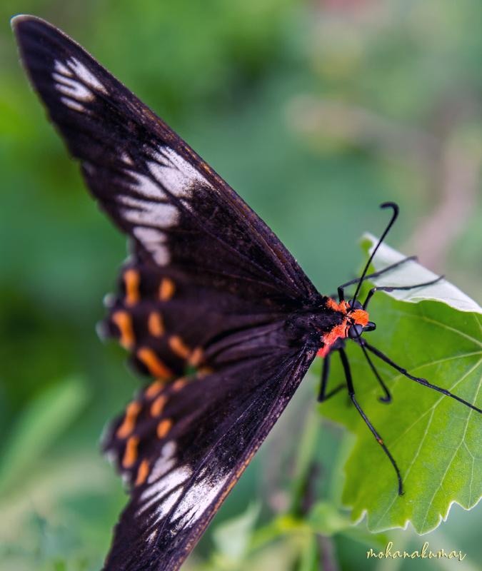 butterfly madurai tamilnadu