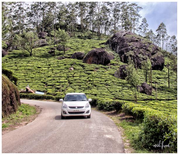 tea plantation mountain munnar kerala