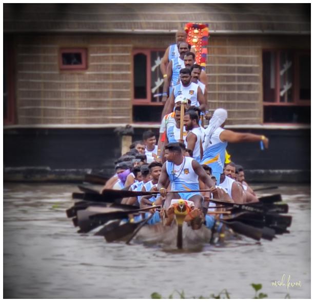 snake boat race nehru trophy alleppey kerala
