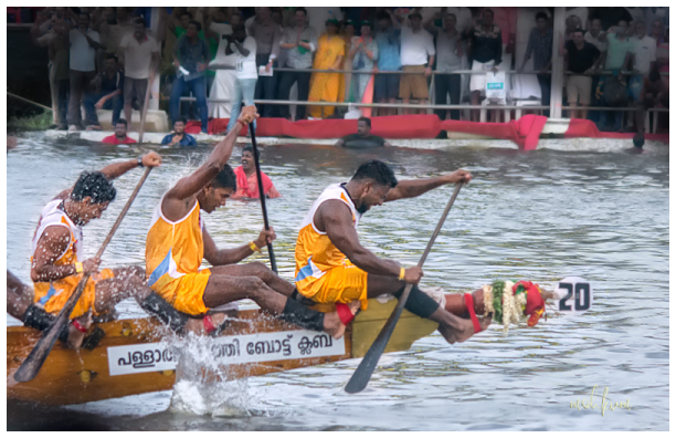 snake boat race alleppey punnamada kerala