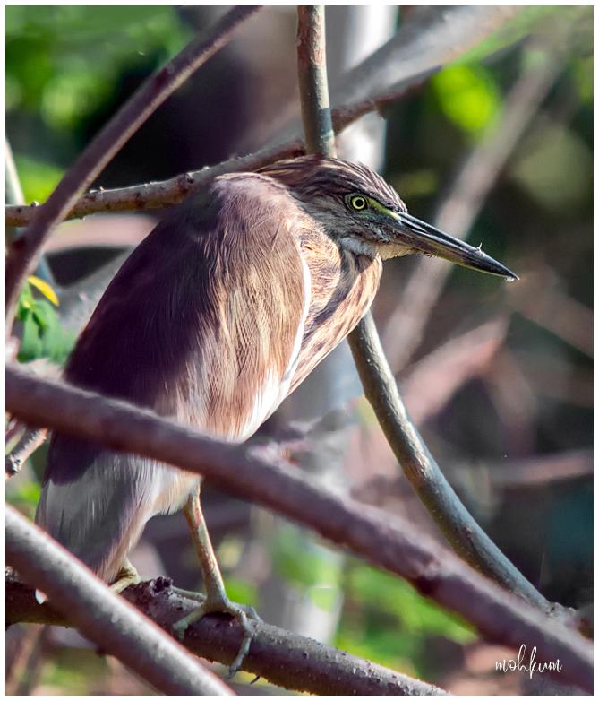 bird heron