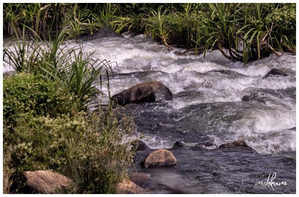 stream pandan forest
