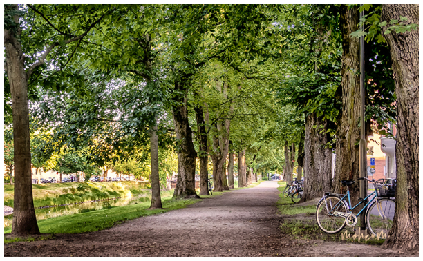 tree road bike canal karlstad sweden