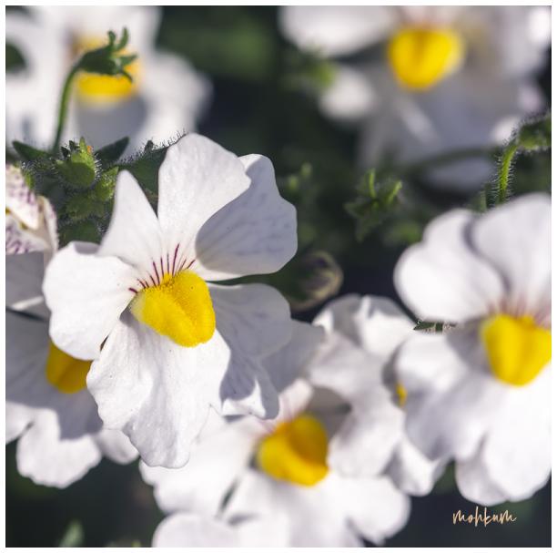 onam flowers kerala