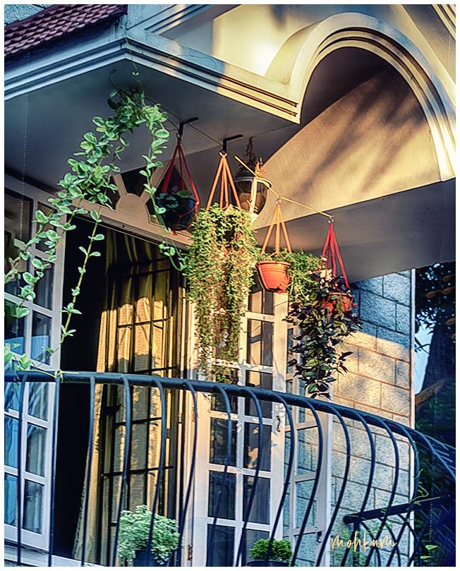 plant balcony