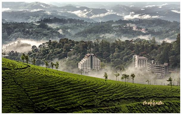 green hills munnar kerala