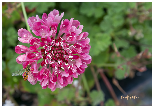 The pink flower!