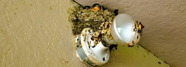 baby birds, nest