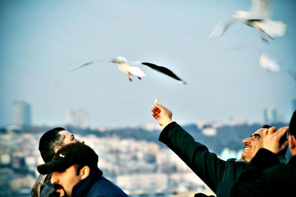 Istambul, gaviota