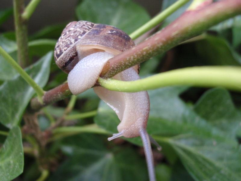Amigo caracol - Snail friend