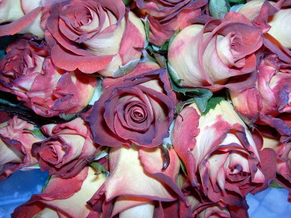 Um ramo de rosas